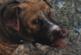 Fallout 4: So bekommst du den 2ten Hund! [Streuner]
