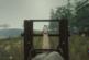 The Forest Patch 0.35 – Mit neuer Kriegsmaschine in den Kampf!