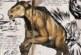 Ark: Survival Evolved Dossier – Chalicotherium … das lebende mobile Katapult!