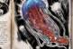 Ark: Survival Evolved Dossier – Cnidaria … Die Quallen sind los!