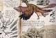 Ark: Survival Evolved Dossier – Microraptor … Der kleine hinterhältige Jäger ist los!